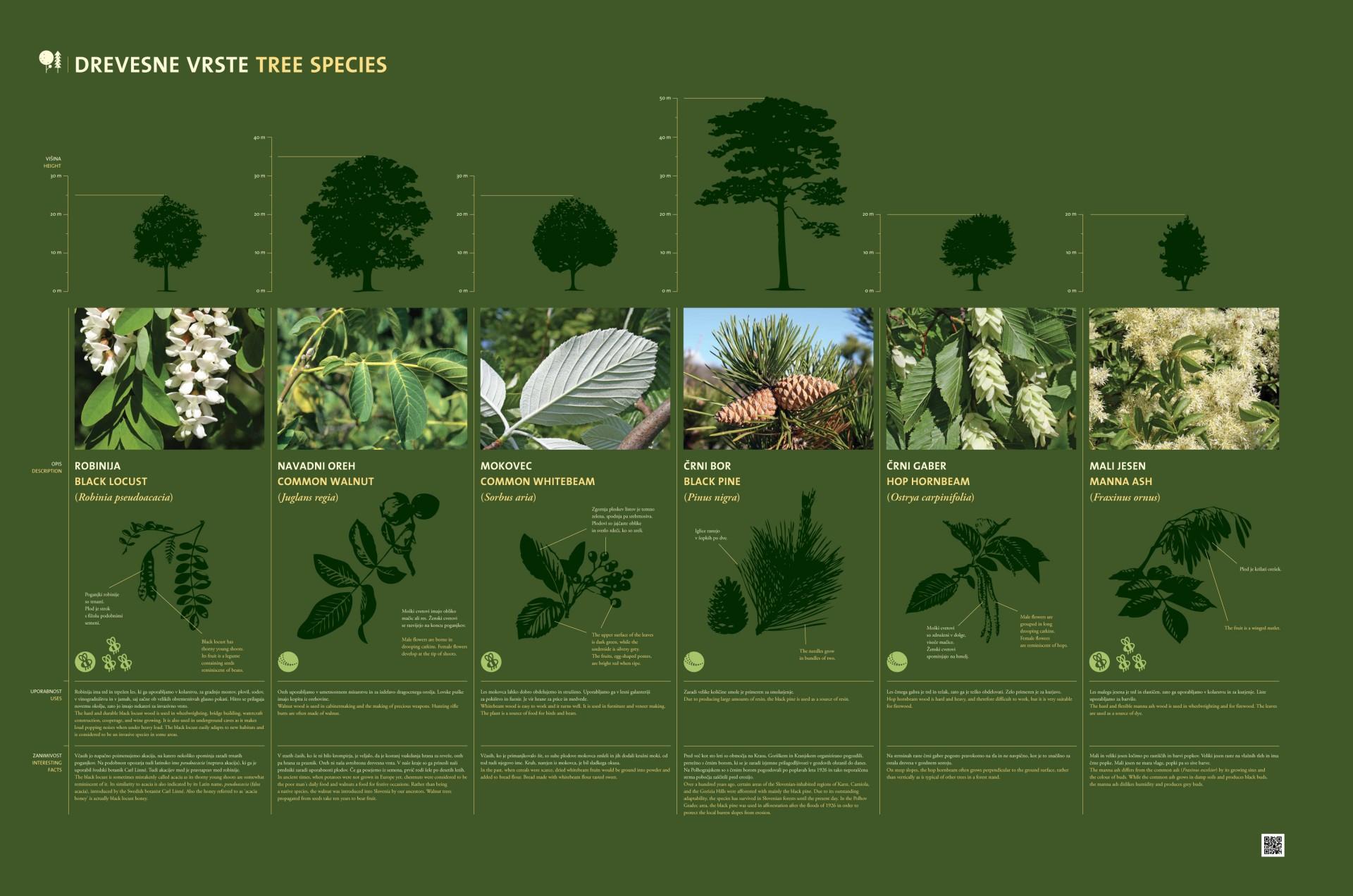 Tree species 2