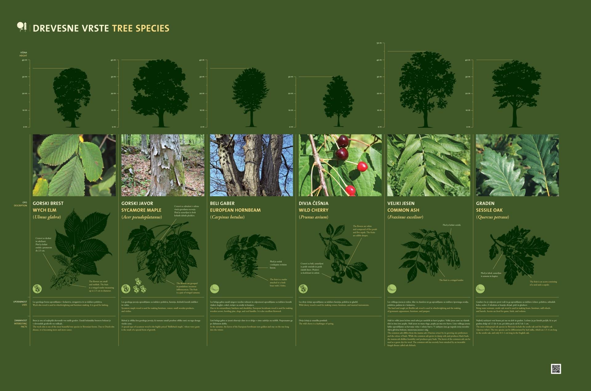 Tree species 3